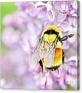 Natures Buzzing Beauty Canvas Print