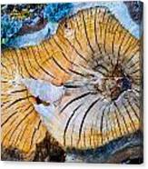 Nature's Calendar Canvas Print