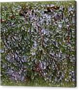 Natures Crystals Canvas Print