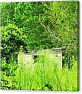 Natures Green Canvas Print