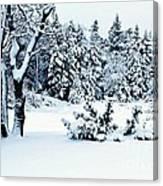 Natures Handywork - Snow Storm - Snow - Trees 2 Canvas Print