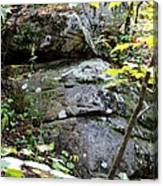 Nature's Mossy Boulders Canvas Print