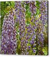 Natures Perfume Canvas Print