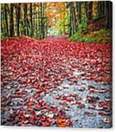 Nature's Red Carpet Canvas Print