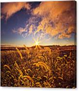 Nature's Romm With A View Canvas Print