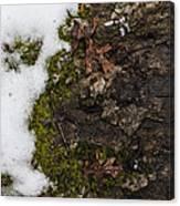 Nature's Still Life Canvas Print