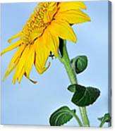 Nature's Sunshine Canvas Print