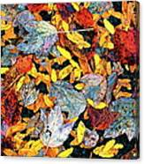 Nature's Tapestry Canvas Print