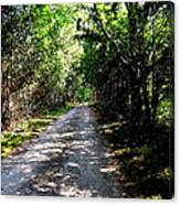 Nature's Trail Canvas Print