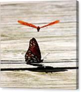 Nature's Umbrella Canvas Print