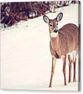 Natures Winter Visit Canvas Print