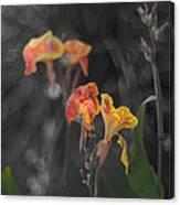 Naturescape 56 B Canvas Print