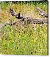 Naturescape Canvas Print