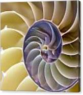 Nautilus Side View Canvas Print