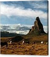 Navajo Horses At El Capitan Canvas Print