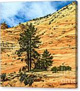 Navajo Sandstone Canvas Print
