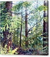 Navarro River Redwoods Canvas Print