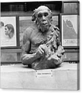 Neanderthal Museum Display, 1924 Canvas Print