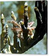 Neck Crab - Macro Undersea Reef Life Canvas Print