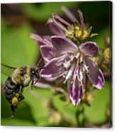 Nectar Delivery Canvas Print
