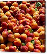 Nectarines For Sale At Weekly Market Canvas Print