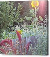 Neighboring Gardeners Canvas Print