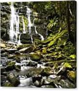 Nelson Falls Tasmania Canvas Print