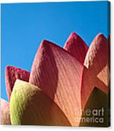 Nelumbo Nucifera Canvas Print