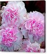 Neon Carnations Canvas Print