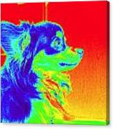 Neon Papillion Canvas Print