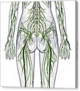 Nervous System, Illustration Canvas Print