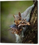 Nest Building Squirrel Canvas Print