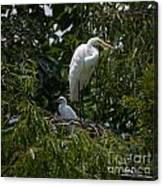 Nest Lookout Canvas Print