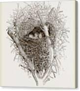 Nest Of Magpie Canvas Print