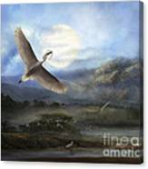 Nesting Egrets Canvas Print