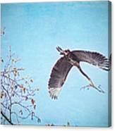 Nesting Heron Canvas Print