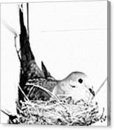 Nesting Mama Canvas Print