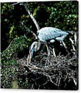 Nesting Season Canvas Print