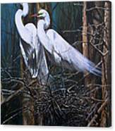Nesting Snowy Egrets Canvas Print