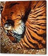 Nestled Tiger Canvas Print