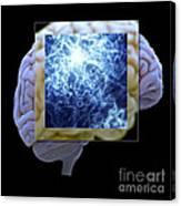 Neuron And Brain Canvas Print