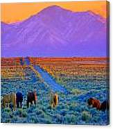 Wild Horse Country  Canvas Print