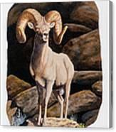 Nevada Desert Bighorn Canvas Print