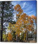 Nevada Fall Colors Canvas Print
