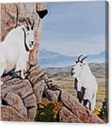 Nevada Mountain Goats Canvas Print