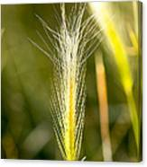 Nevada Plant Life Canvas Print