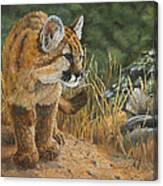 New Adventures - Cougar Cub Canvas Print