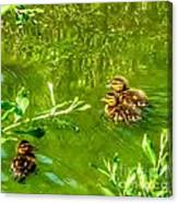New Baby Ducklings Canvas Print