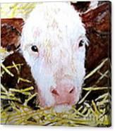 New Born On The Farm Canvas Print