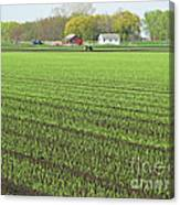 New Crop Canvas Print